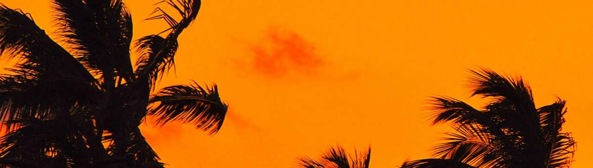 La Marinas palmer i solnedgången